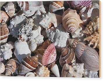 Seashells Wood Print by Kristin Elmquist