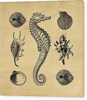 Wood Print featuring the digital art Seashells Vintage by Edward Fielding