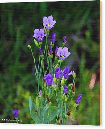 Wood Print featuring the photograph Seaside Gentian Wildflower  by Barbara Bowen