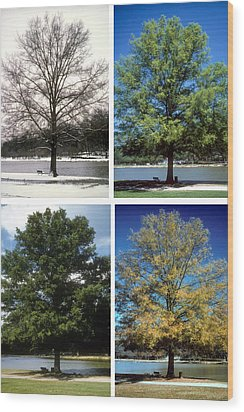 Seasons Of Time Wood Print by Gerard Fritz