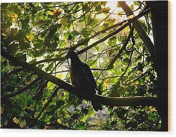 Wood Print featuring the photograph Seasons Will Change by Bernd Hau