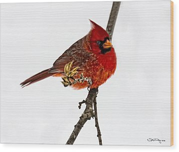 Second Cardinal Wood Print