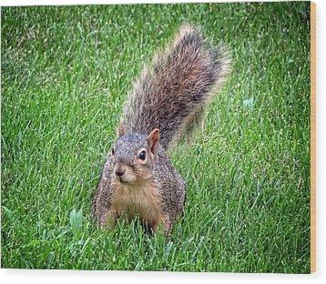 Secret Squirrel Wood Print by Kyle West