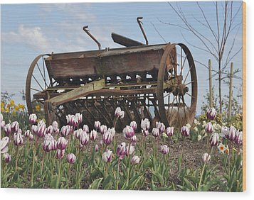 Seed Drill Tulips Wood Print by Brent Easley