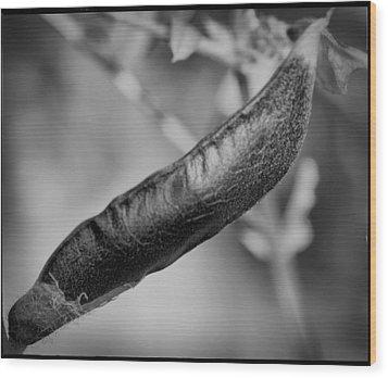 Seed Pod Wood Print