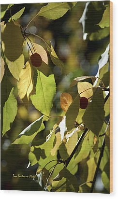 Seed Pods In The Fall Wood Print by Tom Buchanan