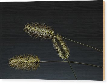 Seeds Of Life Wood Print by Christopher L Thomley