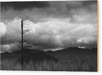 Seeking New Horizons Wood Print by Holly Kempe
