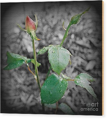 Selective Color Rose Bud Wood Print by Emily Kelley