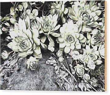 Wood Print featuring the photograph Sempervivum - Ebony And Ivory  by Janine Riley