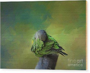 Senegal Parrot Wood Print