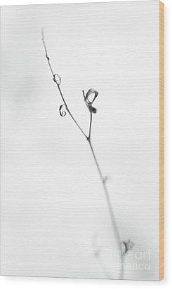 Sensitive Wood Print by Gabriela Insuratelu