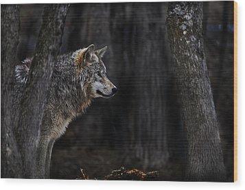 Sentinel Wood Print