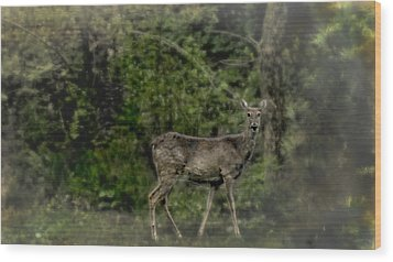 Separated And Diseased Wood Print