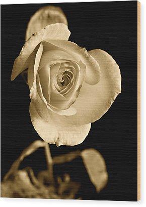 Sepia Antique Rose Wood Print by M K  Miller