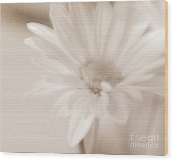 Sepia Daisy Wood Print by Lisa McStamp