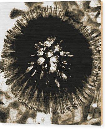 Sepia Dandelion Wood Print