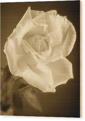 Sepia Rose With Rain Drops Wood Print by M K  Miller