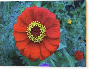 September Red Beauty Wood Print
