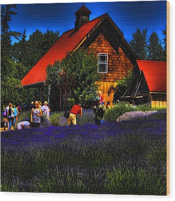 Sequim Lavender Wood Print by David Patterson