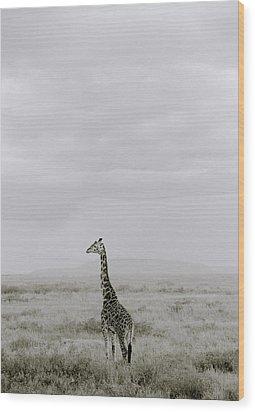Serengeti Solitude Wood Print by Shaun Higson