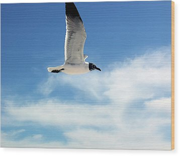 Wood Print featuring the photograph Serenity Seagull by Marie Hicks