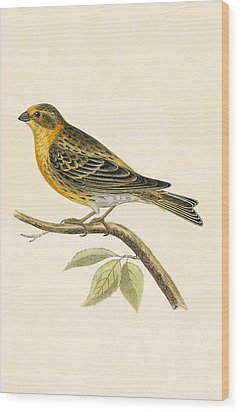 Serin Finch Wood Print by English School