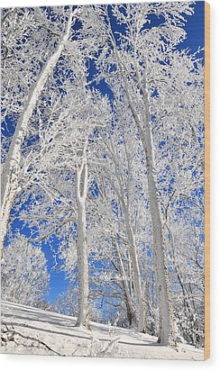 Serious Rime Frost Wood Print by Alan Lenk