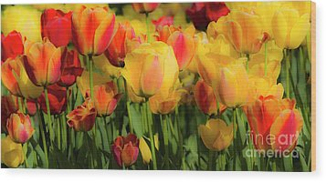 Wood Print featuring the photograph Seriously Spring by Wendy Wilton