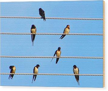 Seven Swallows Wood Print by Ana Maria Edulescu