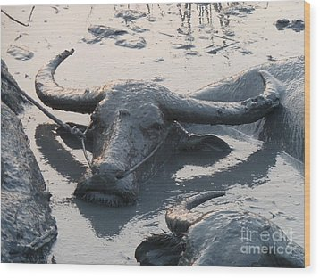 Wood Print featuring the photograph Several Water Buffalos Wallowing In A Mud Hole In Asia - Closer by Jason Rosette