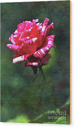 Sexy Rexy Rose Wood Print by Kaye Menner