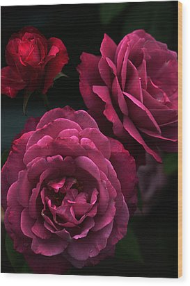 Shaded Roses Wood Print by Kim