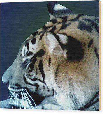 Shades Of A Tiger  Series Wood Print by Debra     Vatalaro