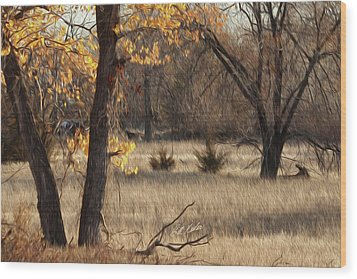 Shades Of Autumn Wood Print by Bill Kesler