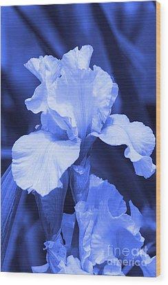 Shades Of Blue Iris  Wood Print