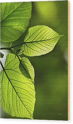 Shades Of Green Wood Print by Christina Rollo