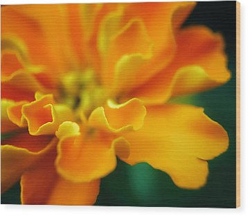 Wood Print featuring the photograph Shades Of Orange by Eduard Moldoveanu