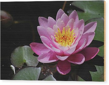 Wood Print featuring the photograph Shades Of Pink by Amee Cave