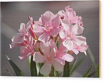 Shades Of Pink Wood Print by Susan Heller