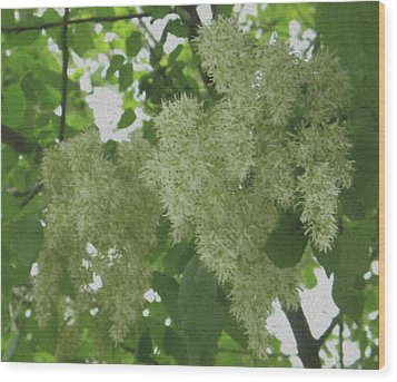 Wood Print featuring the photograph Shadow And Light Canvas by Manuela Constantin