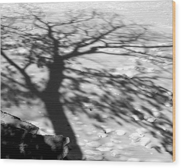 Shadow Tree  Herrick Lake  Naperville Illinois Wood Print by Michael Bessler