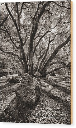 Shadow Tree Wood Print