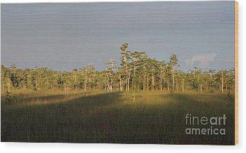 Shadows Of The Cypress Wood Print by Matt Tilghman
