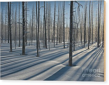 Shadows Of The Forest Wood Print by Sandra Bronstein
