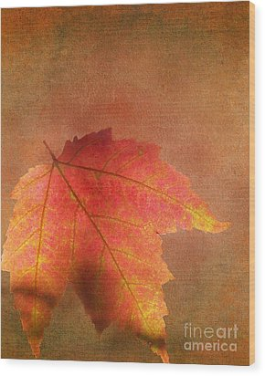Shadows Over Maple Leaf Wood Print by Kathi Mirto