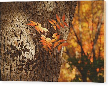 Fall Color Wood Print by Tam Ryan