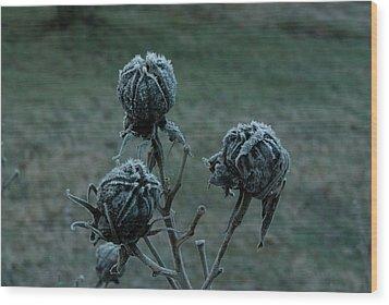 Shadowy Frozen Pods From The Darkside Wood Print by Douglas Barnett