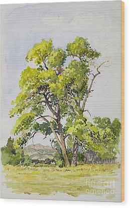 Shady Oak Tree Wood Print by James Robert MacMillan