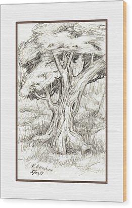 Shady Tree Wood Print by Ruth Renshaw